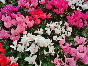 la flor de invierno